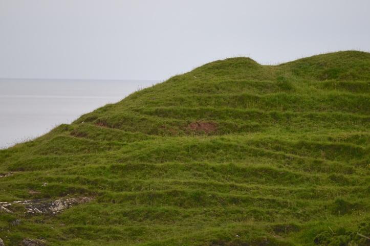 sheepland-beg-grass