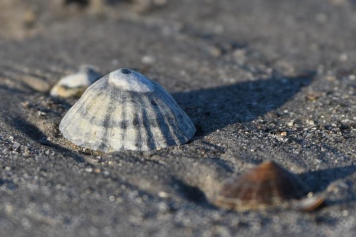 drumfad-shell